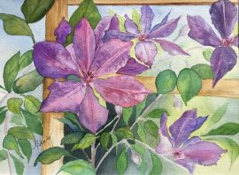 Alice Healy, Clematis, Watercolor