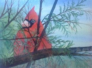 Cardinal, Watercolor, Alice Healy