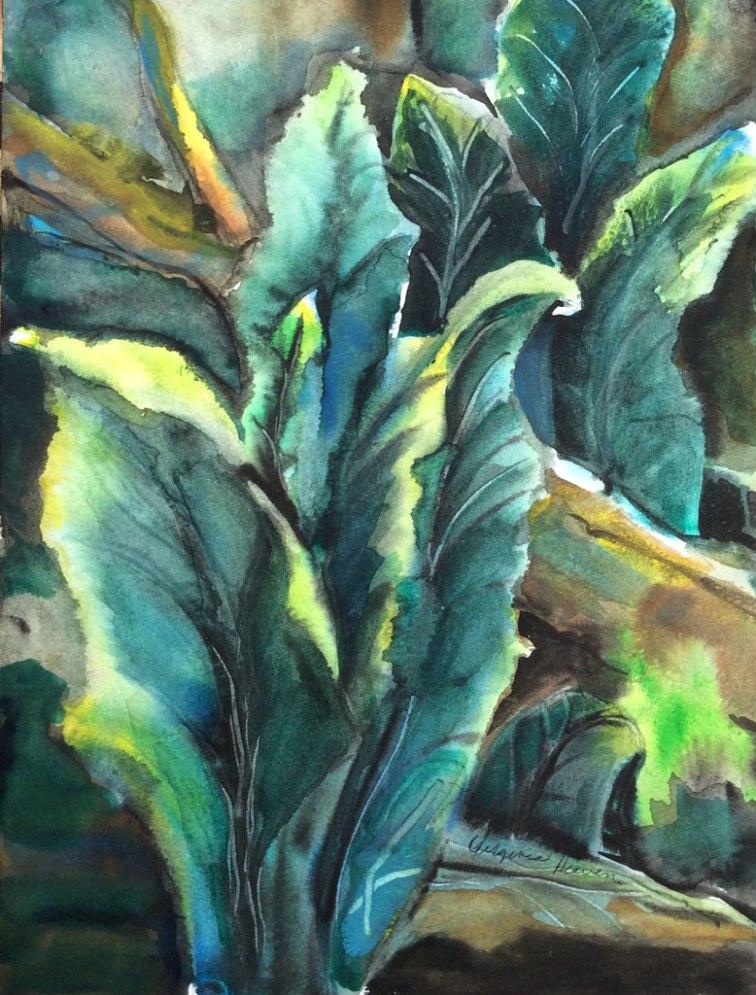 Stimpson Spring Cabbage, Watercolor, Virginia Heaven