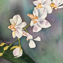 Alice Healy, Orchids, Watercolor