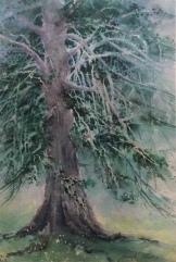Beryl Adams, Monterey Tree, Watercolor, Barn exhibit