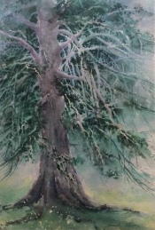 Beryl Adams, Monterey Tree, Watercolor, Barn exhibit