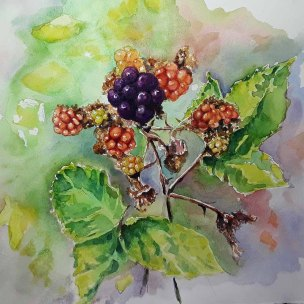 Sarah Lane, Blackberries, Watercolor